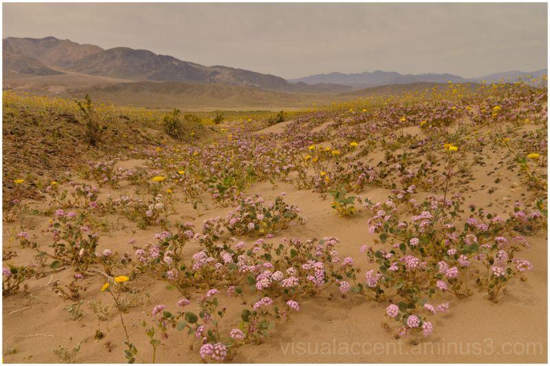 Death Valley, Ashford Mill area