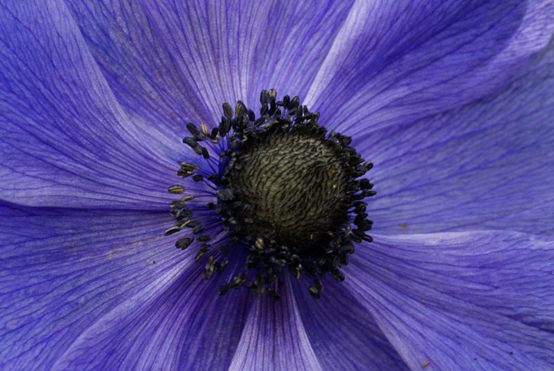 Flower mandala blue black