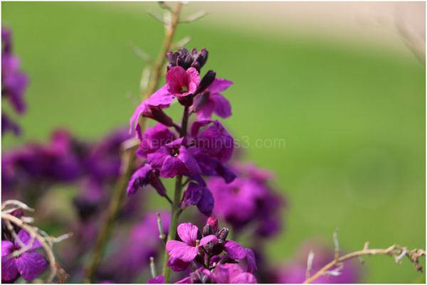Prachtige paarse kleur!