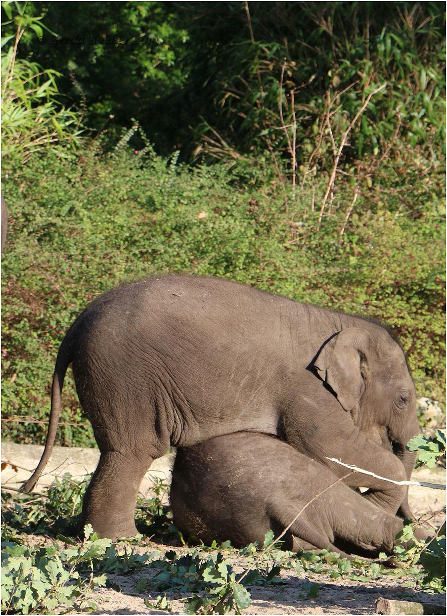 Baby olifant!