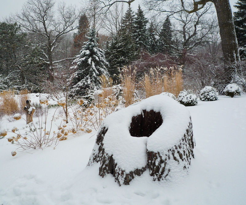 """High Park"" Toronto Winter snow stump plants"