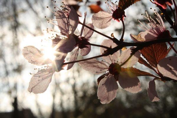 A spring morning