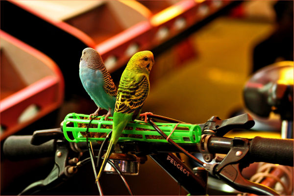 birds on bike