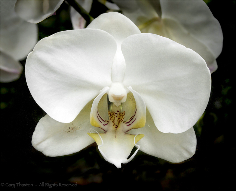 Orchid and Friend 2
