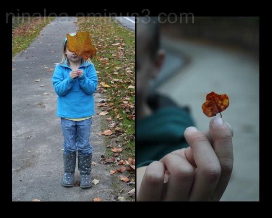 Fall, Leaf