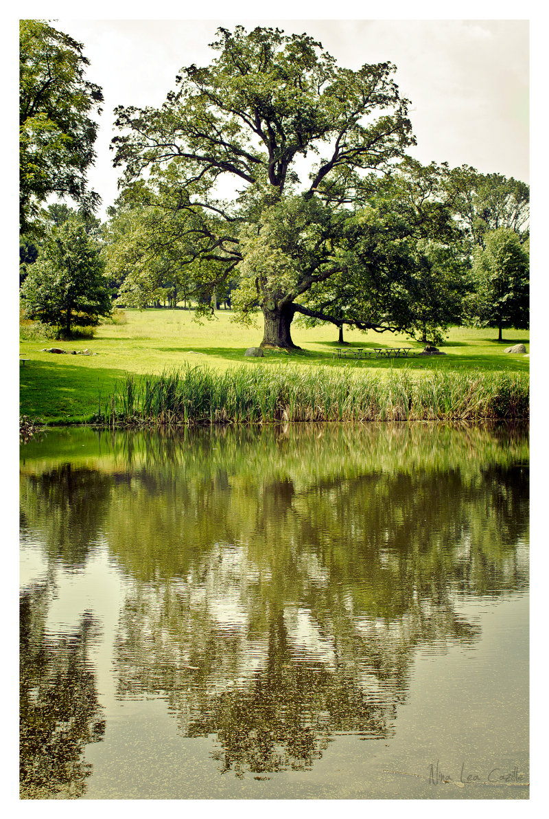 Reflections at Springton Manor, Take Two