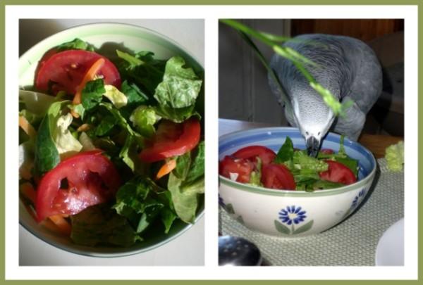 Salad Season
