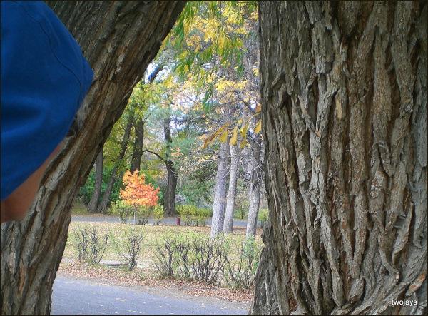 Fall in Sacajewea Park