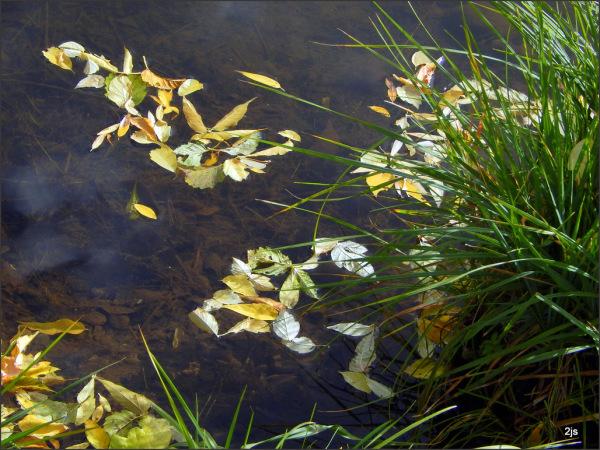 Pond up close.