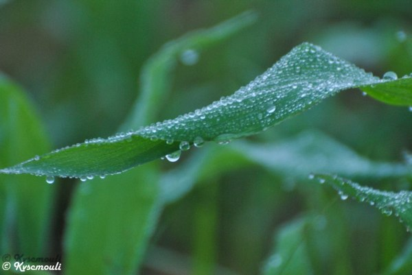 Morning Dew...!