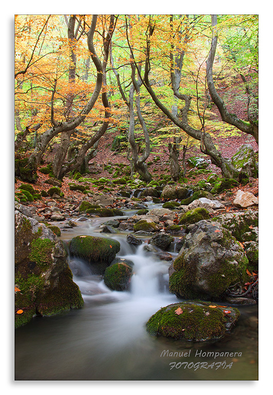 Seda y otoño