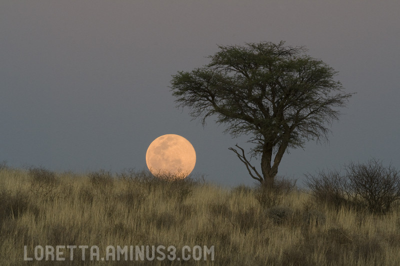 Kalahari full moon