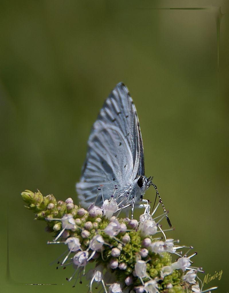 nature sauvage macro papillon