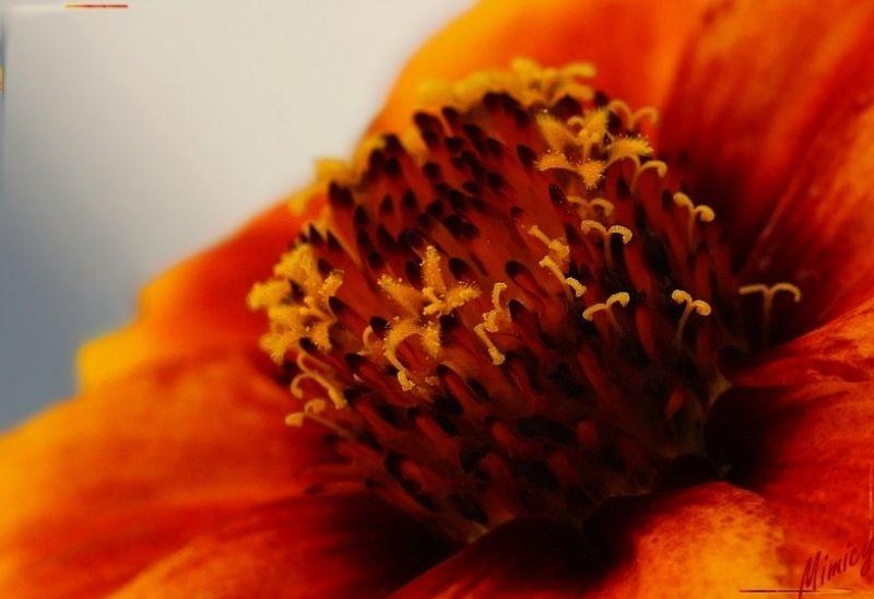 fleur sauvage macro nature