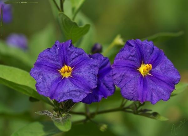 Flower fleur nature