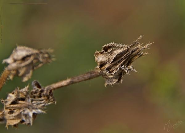 Nature sauvage akène