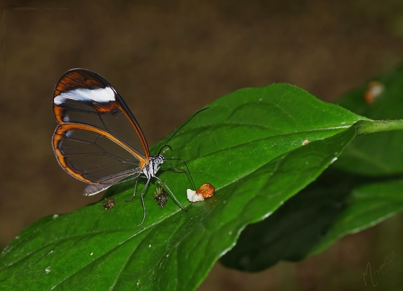 Faune papillon exotique