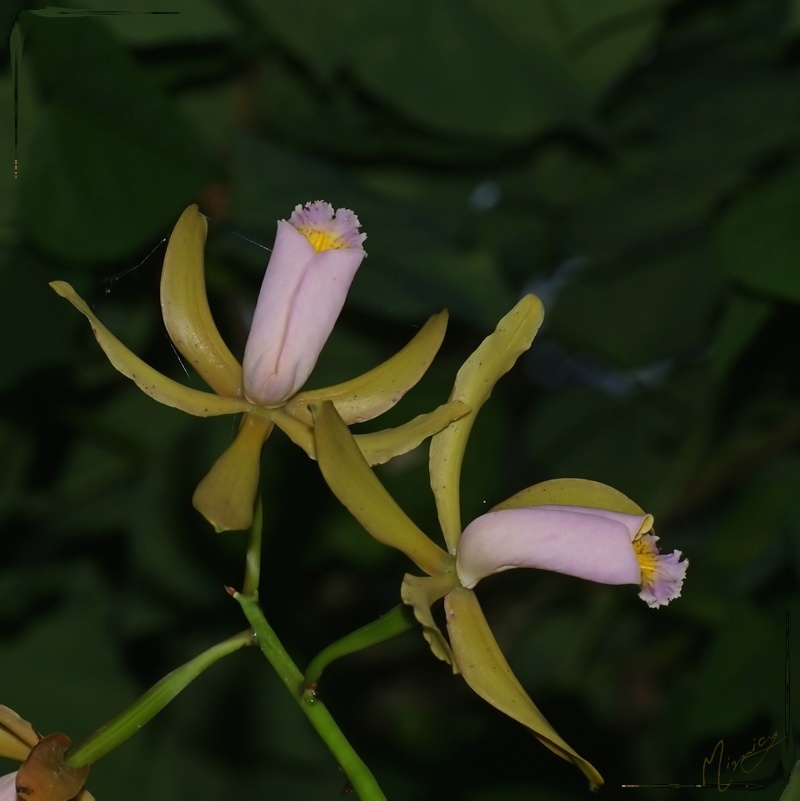 flower fleur orchidee