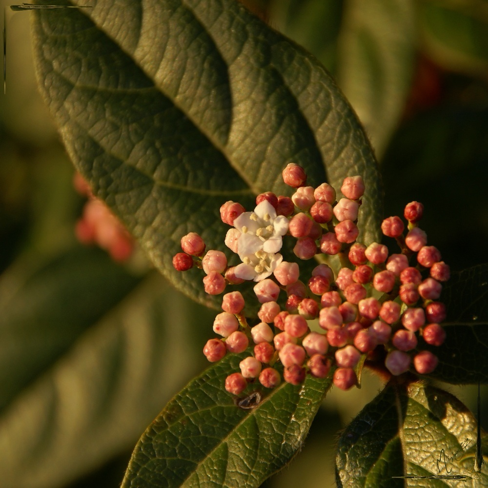 Flower fleur jardin arbuste