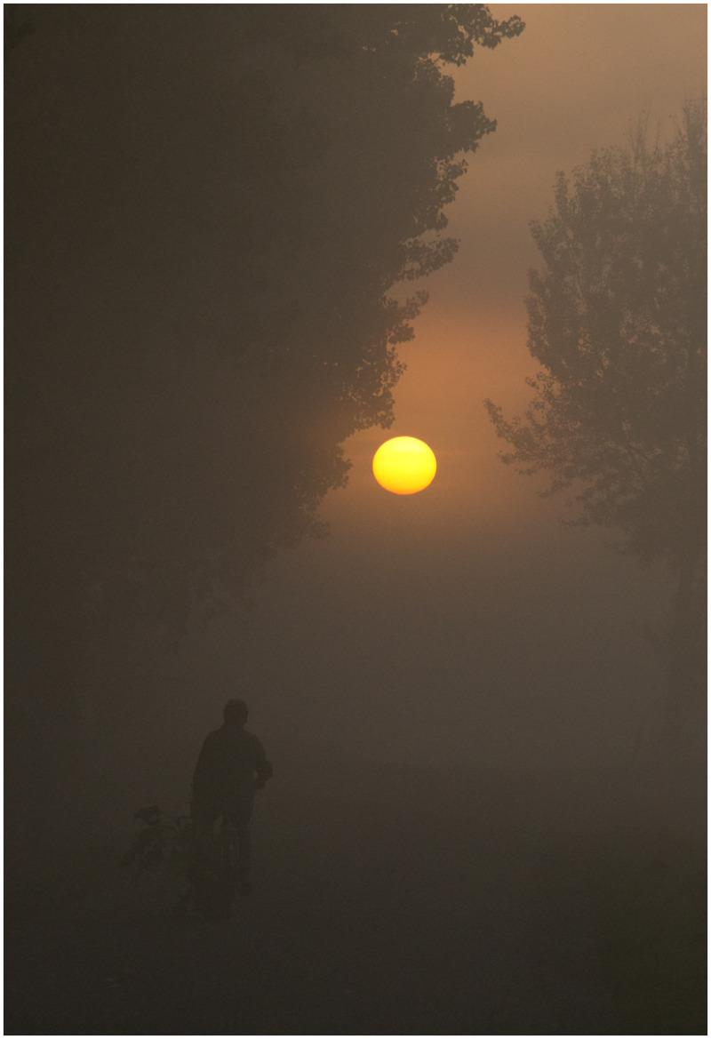 Foggy morning - 2