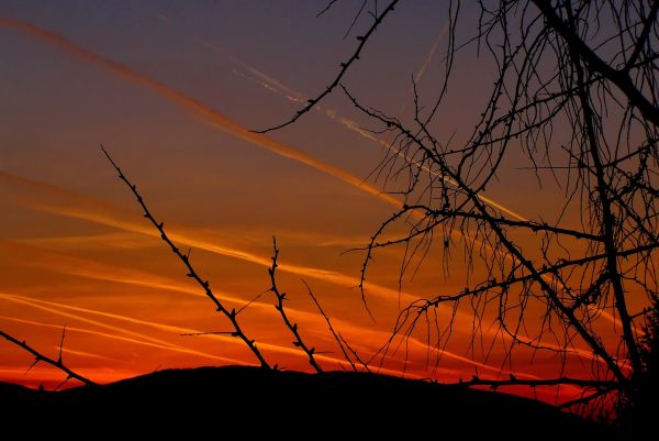 spring sunset with contrails