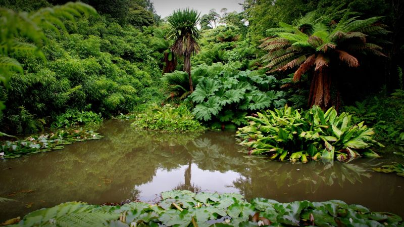 the jungle, heligan gardens, cornwall