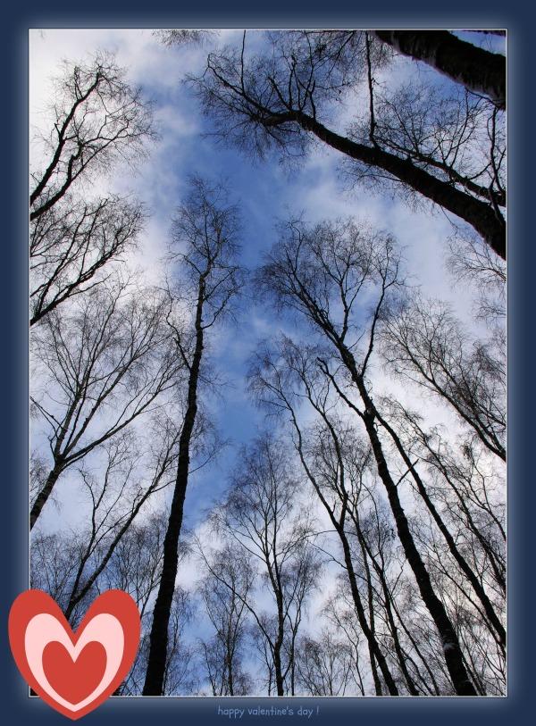 waldviertel, trees, sky, valentine's day