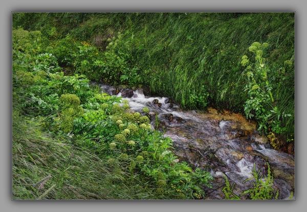 iceland 2014, stream through a meadow, flowers