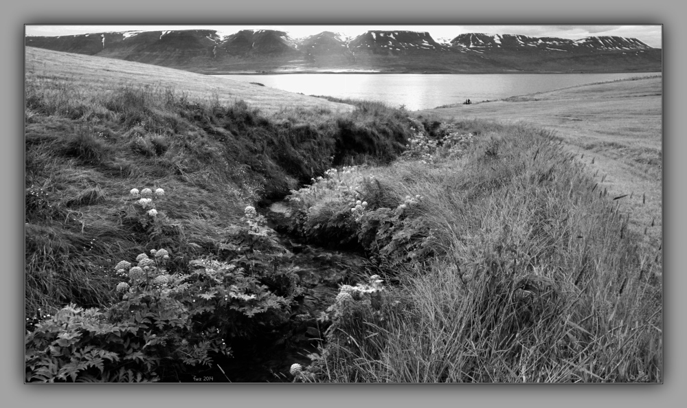 iceland 2014, stream, meadow, flowers, infrared