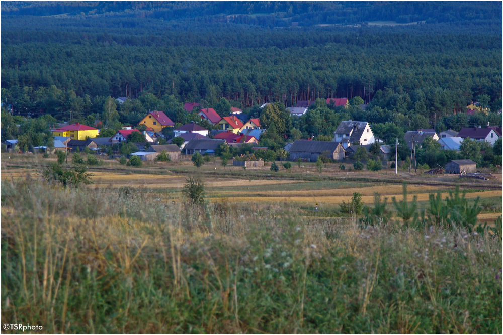 Village in the forest