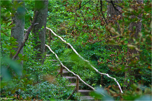 green stairs leaves forest trees