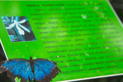 Butterfly reads in Polish