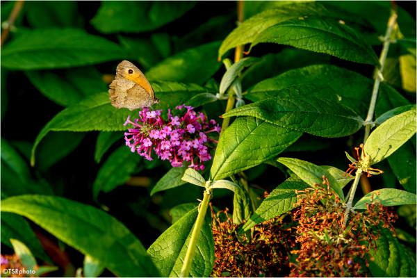 Butterfly pardise 5/5