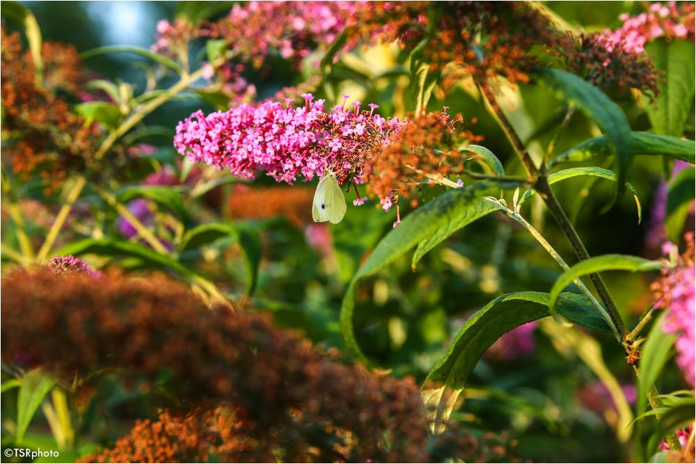 Butterfly pardise 2/5