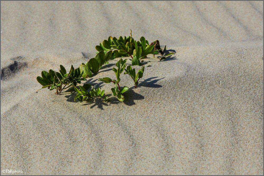 How survives on the desert ?