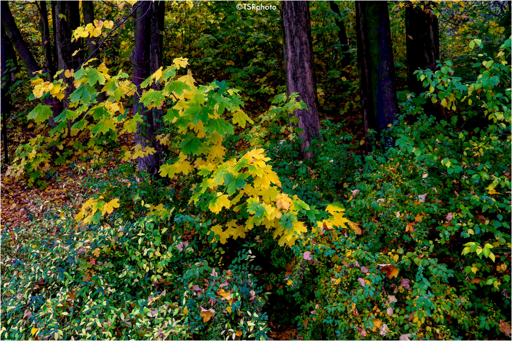 Colours of forest 4/5