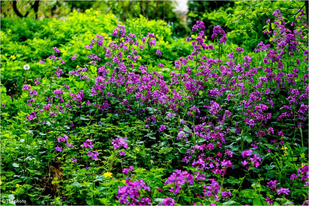 Meadow flowers 3/4