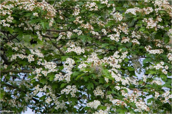Last blossom