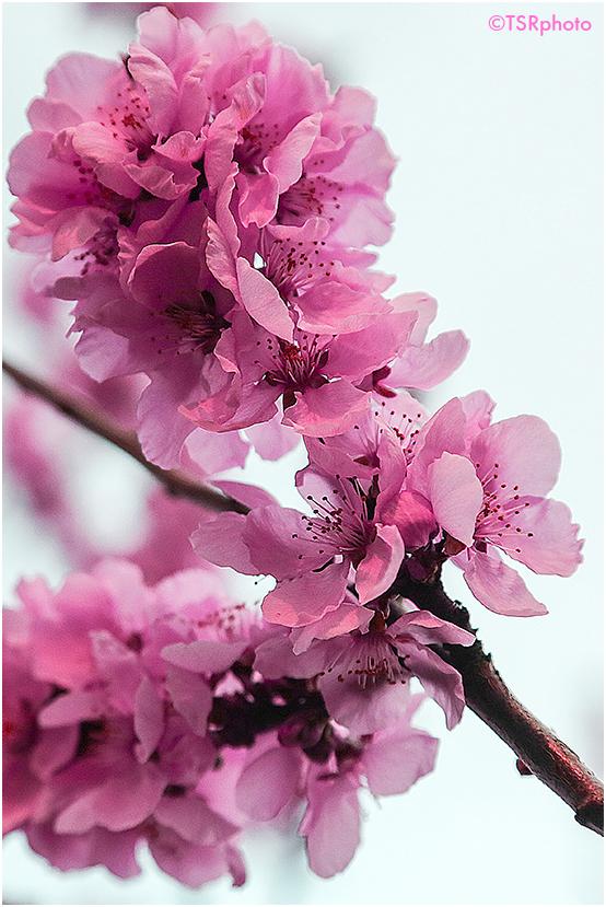 Pink spring 2