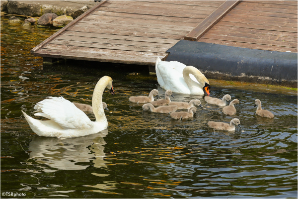 Family in the water