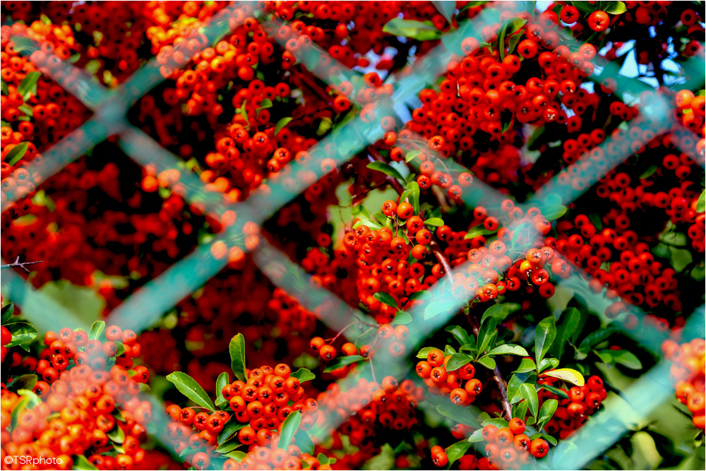 Red behind the fence