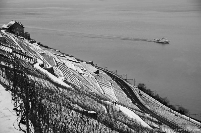 Lavaux sous la neige