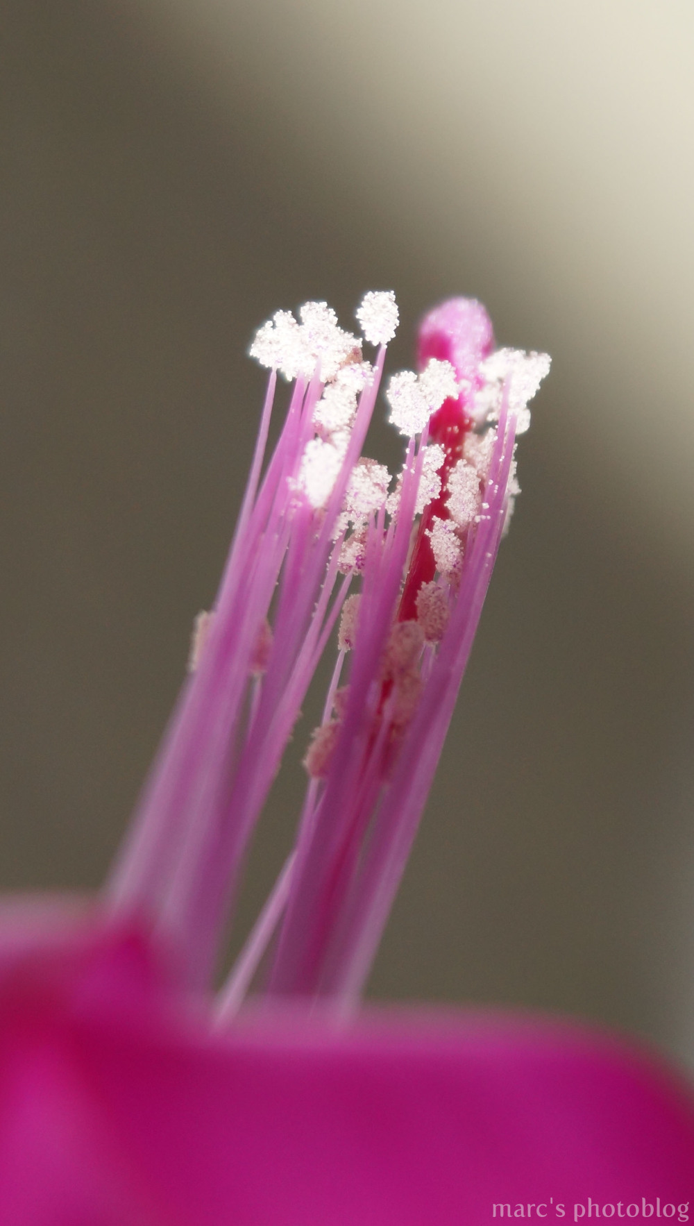 fleurs macro