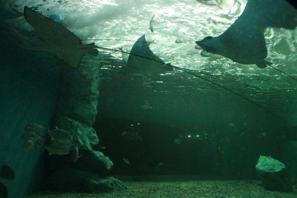 Bangsean Aquarium, Thailand