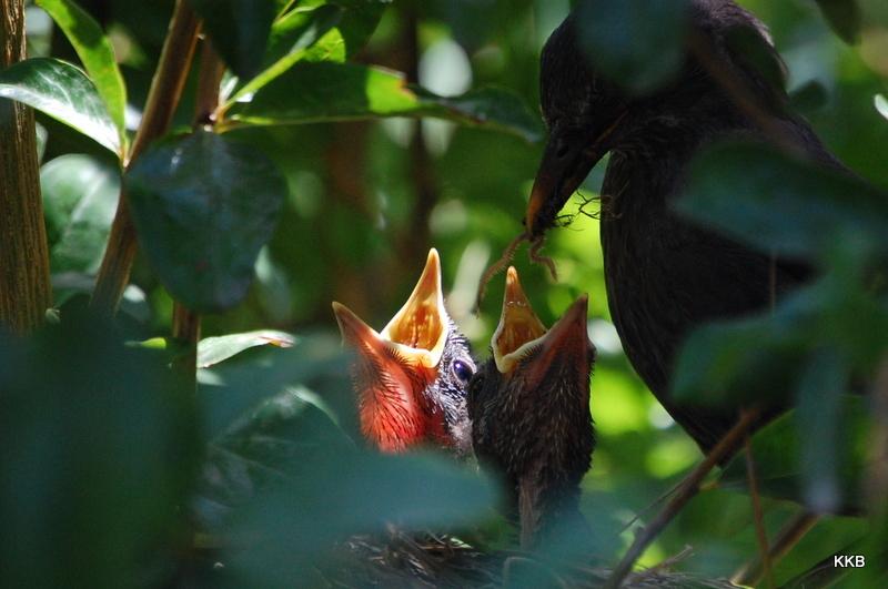 Bird´s  nest
