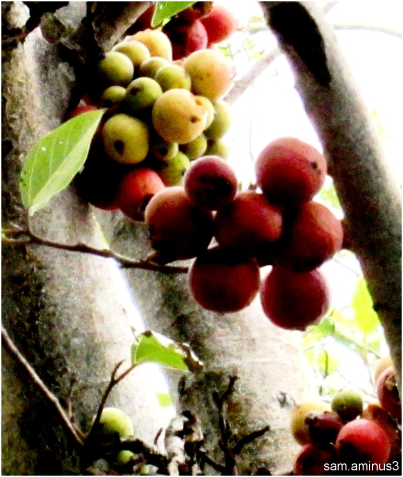 Bunch of Fruits