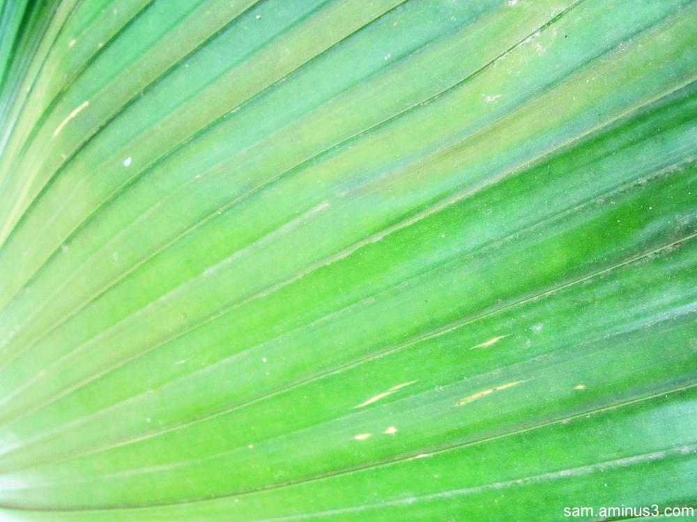Light and Leaf
