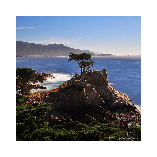 { solitary tree }