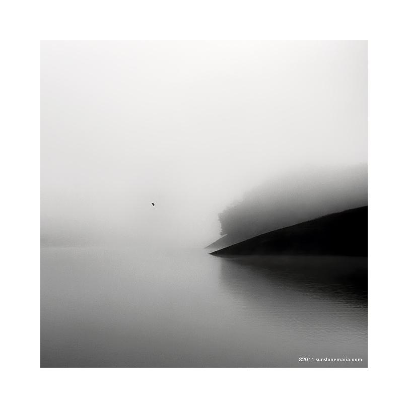{ one last bird }
