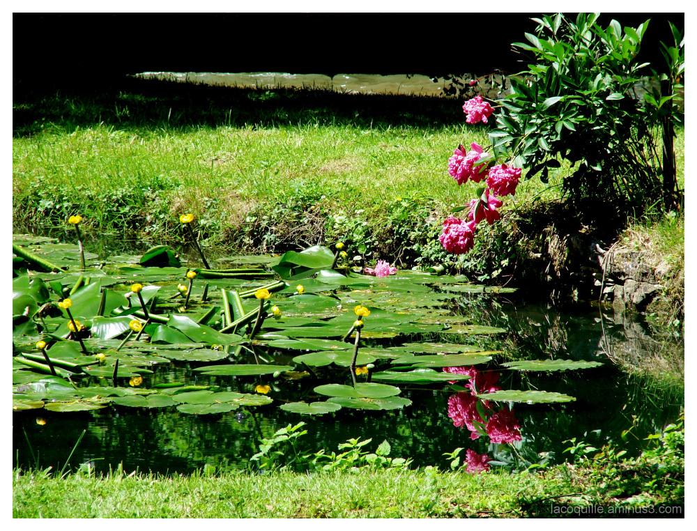 La mare aux fleurs - The pond with flowers